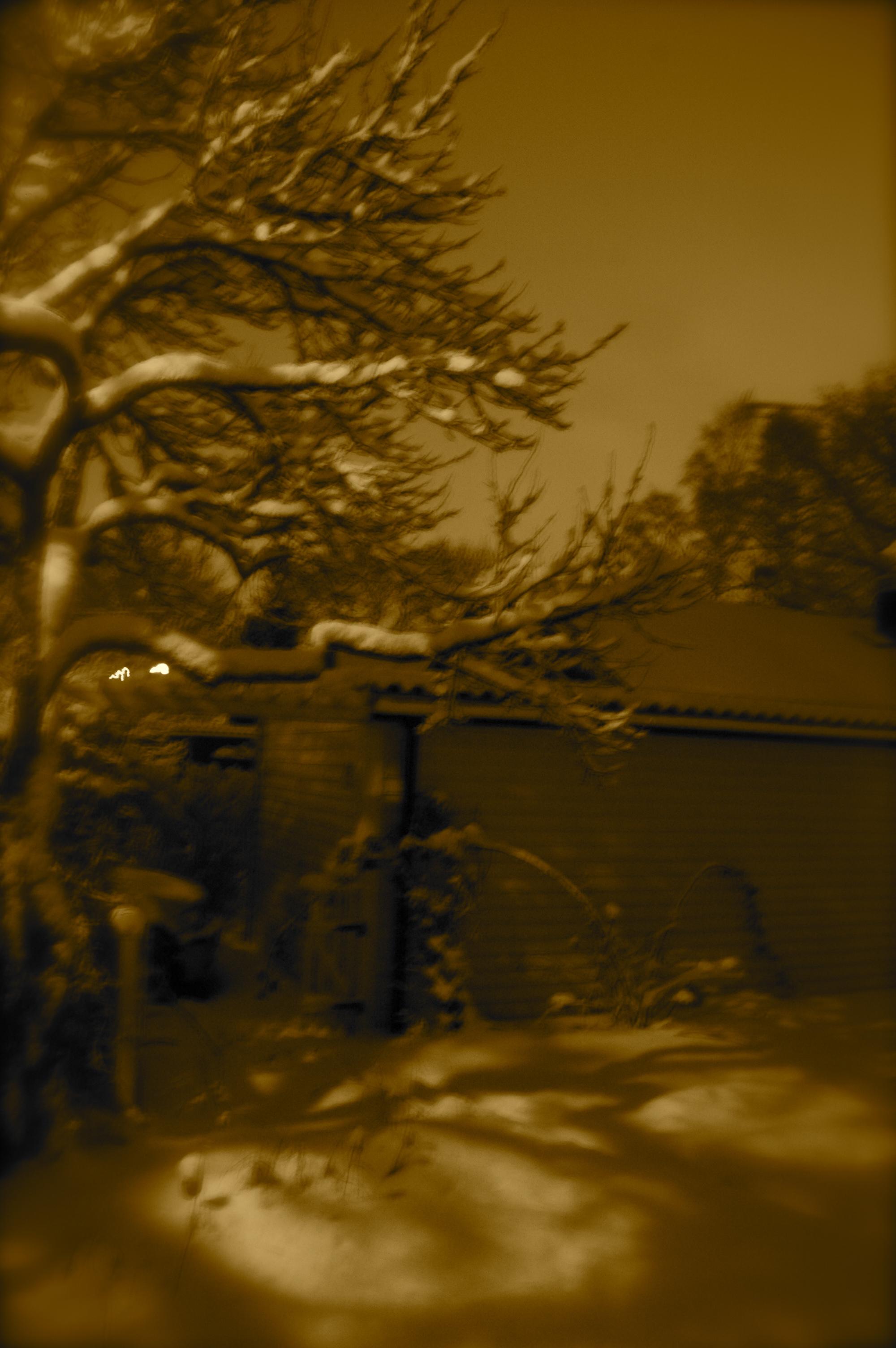 Vintersilouette plommon
