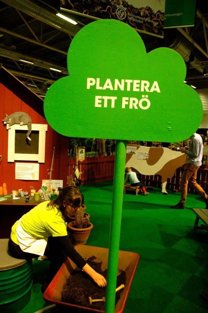 plantera ett frö