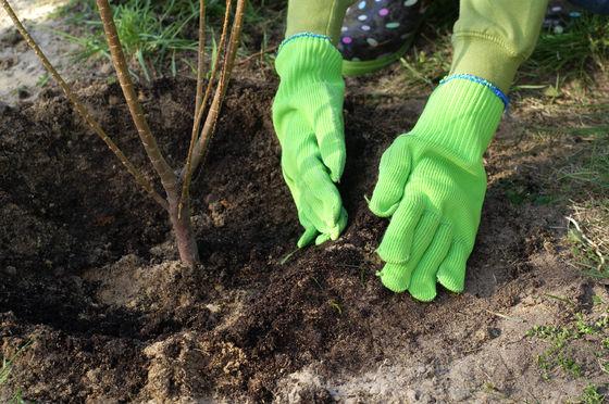 Plantera fler träd