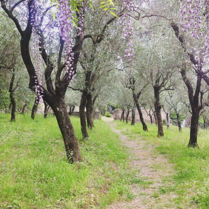 Villa Cimbrone 11
